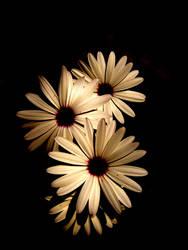 Hope... by msMIM