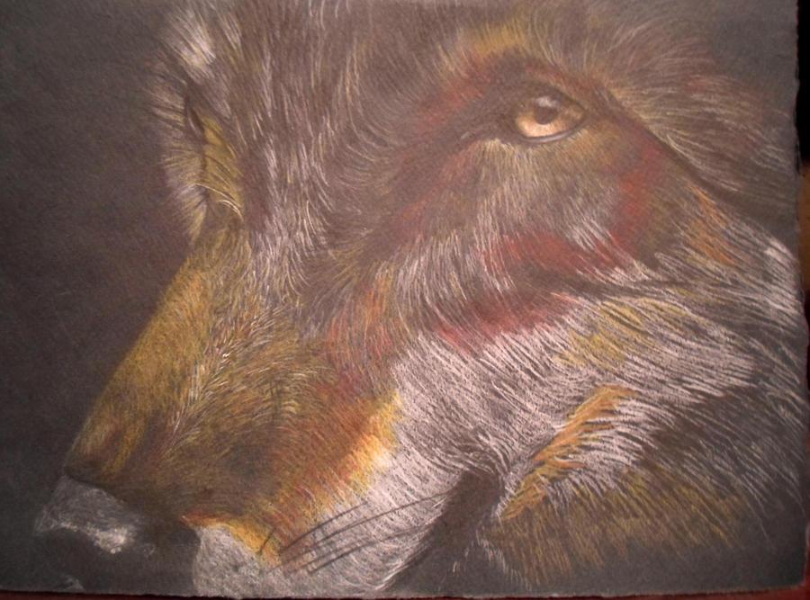 Wolf by msMIM