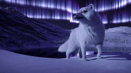 Polar Night by JohnWulffe
