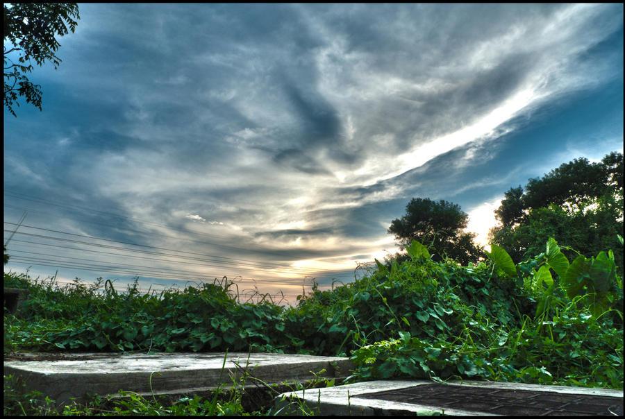 Back Yard HDR by techno-x