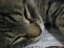 Sleepy Kitten Closeup by AK49BWL