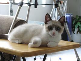 Table Kitten by AK49BWL