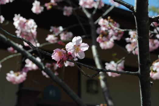 Spring: