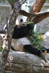 Panda Lunch by suteki1