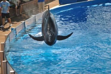 Pilot Whale Dive by suteki1