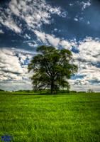 The Tree One by BiOzZ