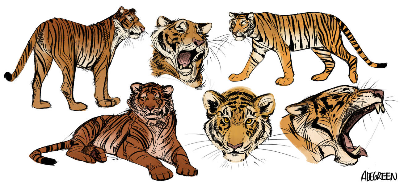 Tiger sketches by aledles