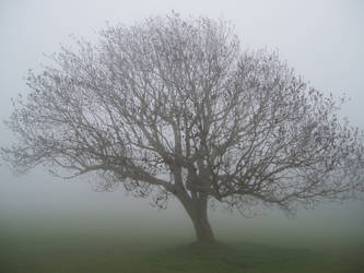 Ghost Tree by ThomasMoulson