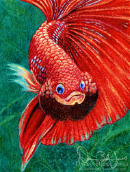 Red Betta in crayons by FamiliarOddlings