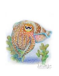 Cuttlefish Stare