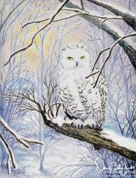 Snow Owl Holiday Card by FamiliarOddlings