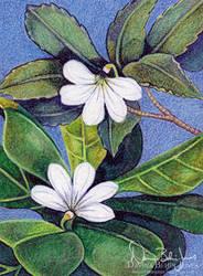 Naupaka Flowers