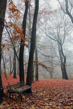 red.forest