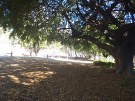 Centenary Place Park @ Fortitude Valley, QLD (2014