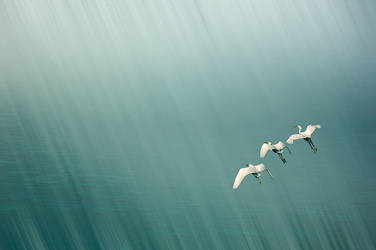 Take off towards a better World by Ananyana
