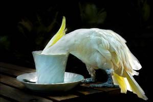 Morning Coffee by Ananyana