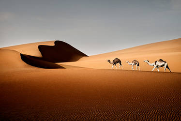 Liwa Desert by Ananyana