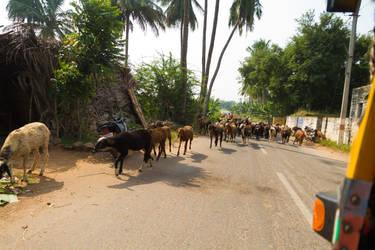 Goats by CK85