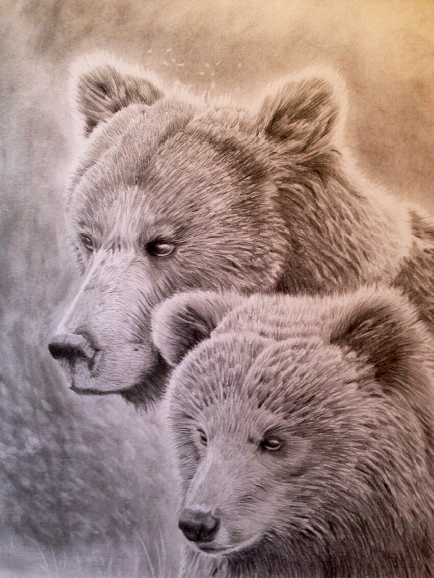 Grizzly Bear And Her Cub Pencil Portrait By Ned The Hat On