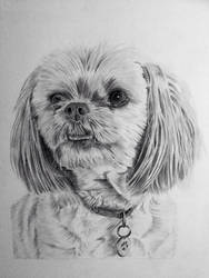 Lhasa Apso terrier dog pencil portrait by Ned-The-Hat