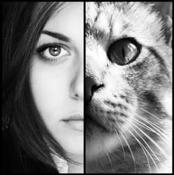 Feline. by TearsThief