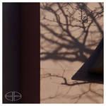 Branch Shadows (2)