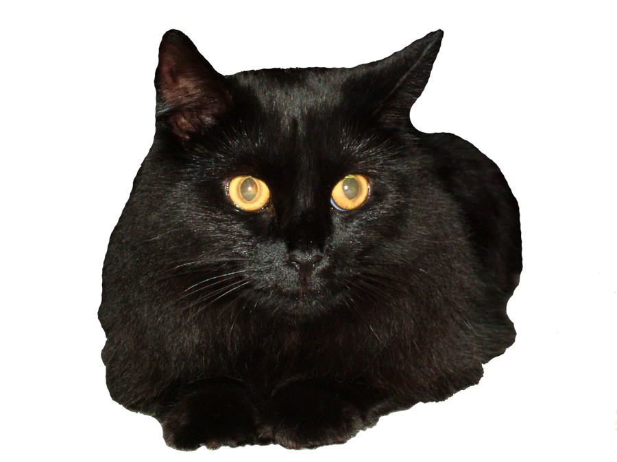 Animate Cat With Clear Background