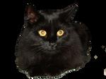 EKD - Gigi the Black Cat