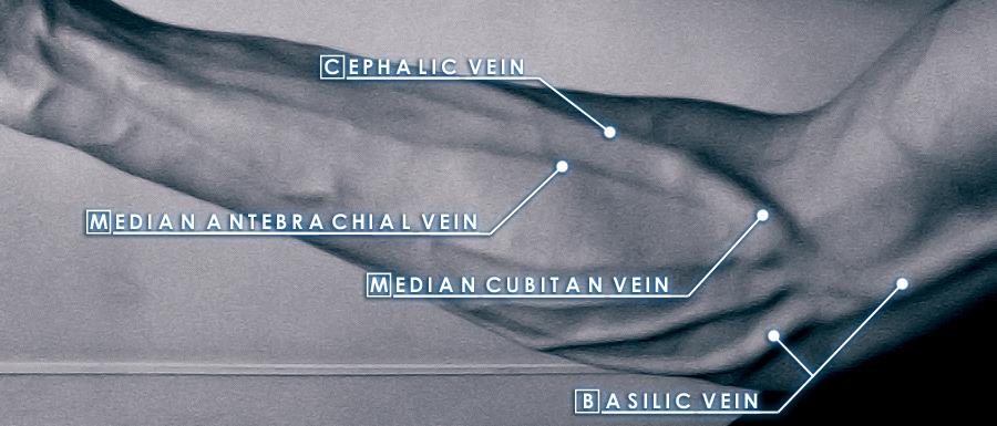Veins by Fire-vel-Aeyne on DeviantArt