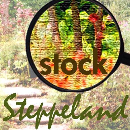 steppelandstock's Profile Picture