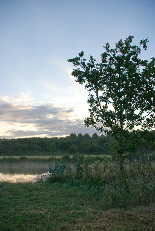 Little oak in morning light 2 by steppelandstock
