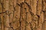 Texture - Dead Oak 2