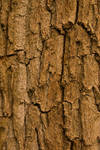 Texture - Dead Oak 3