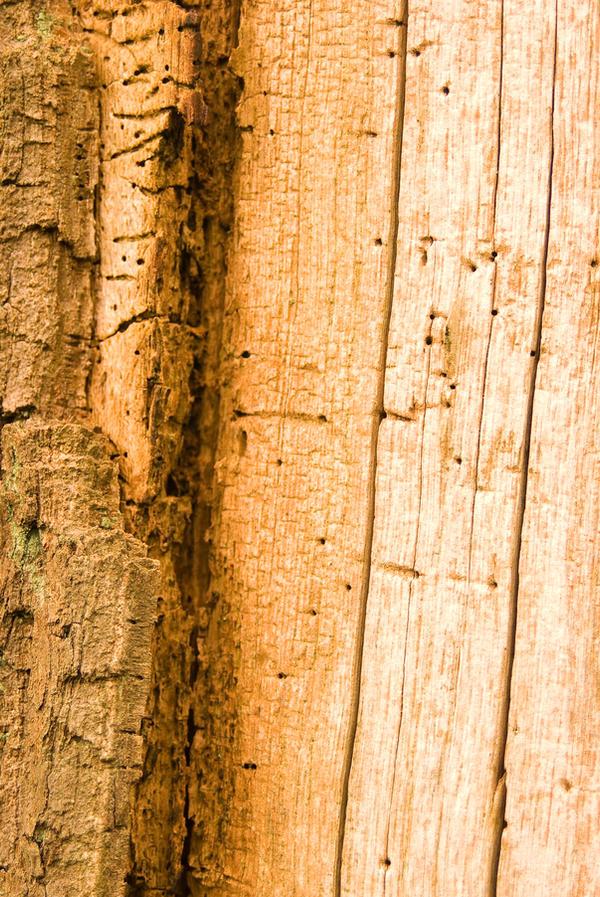 Texture - Dead Oak 4