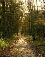 Sunny Path ahead 3 by steppelandstock
