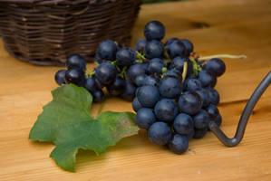 Grapes harvest 4 by steppelandstock