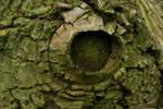 Round window bark texture