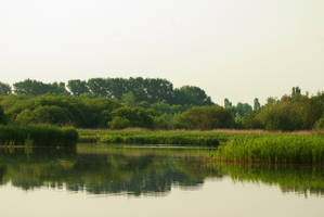 Reeds and water landscape