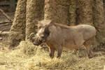 Warthog 1