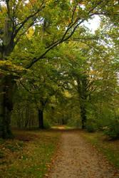 Gold-green woods - background3 by steppelandstock
