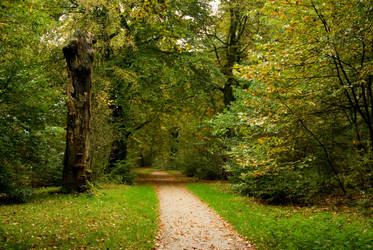 Gold-green woods - background4 by steppelandstock