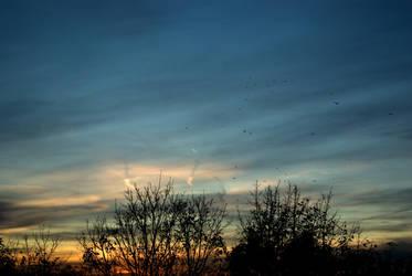Samhain sunset and birds 04 by steppelandstock