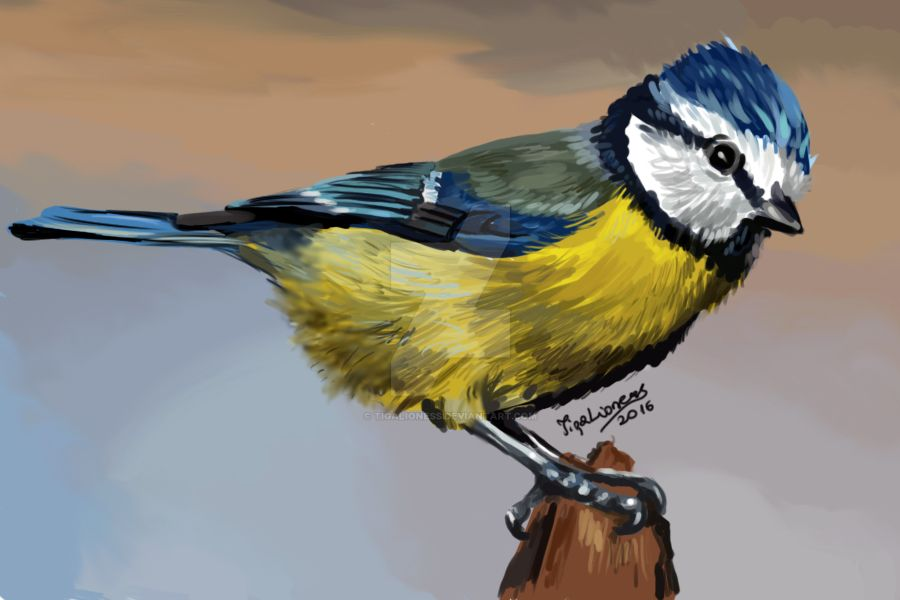 Eurasian blue tit by TigaLioness