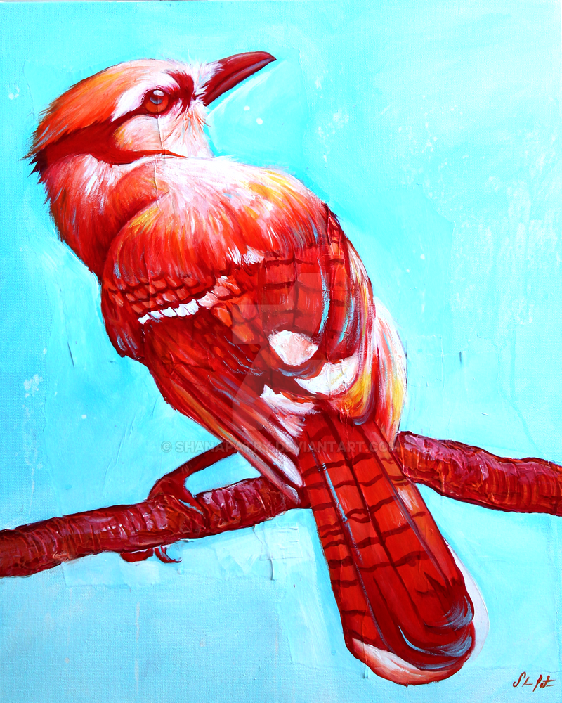 Red jay by ShanaPatry on DeviantArt