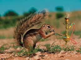 Squirrel Bong by BABY-GREEN-GOBLIN