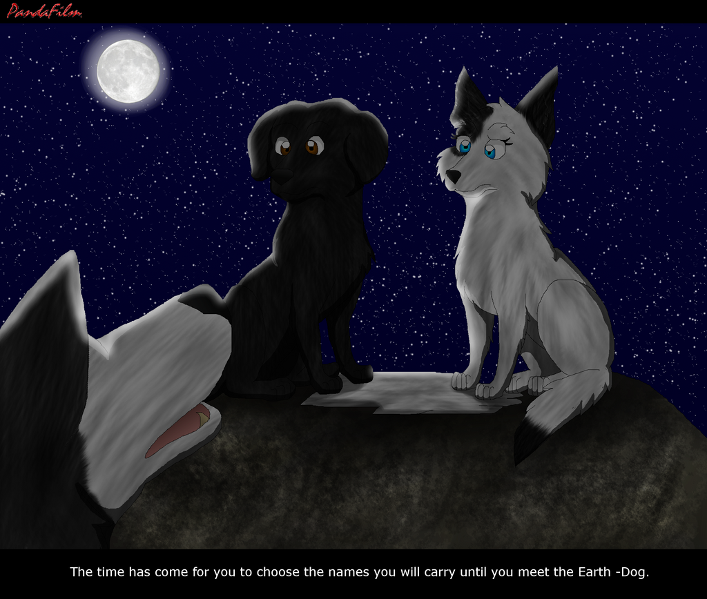 How Many Warriors Books By Erin Hunter Are There: Survivors::The Broken Path::Chapter 3 Page 43 By