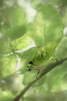 Ancylecha in bramble bush