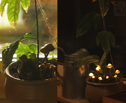 Something strange growing in my flower pot...