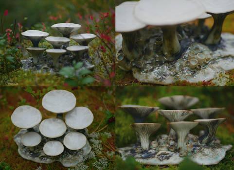 Fungi Palette 1