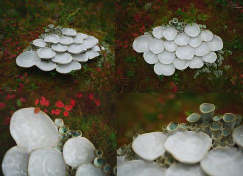 Fungi Palette 2